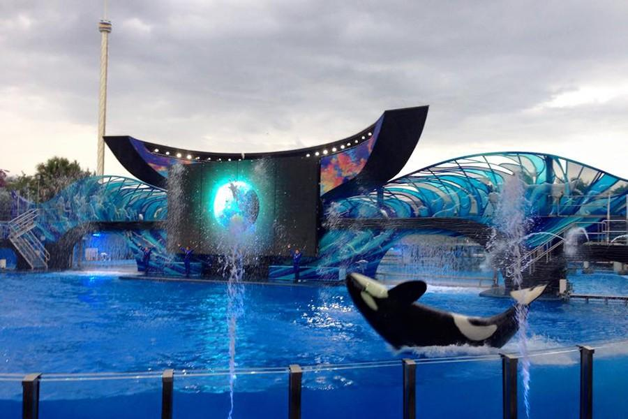 Shamu goes out with the tide